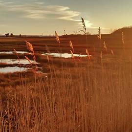 Barn Island Golden Sunset - Pawcatuck CT by Kirkodd Photography Of New England