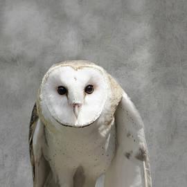 Barn Owl by Marilyn Wilson