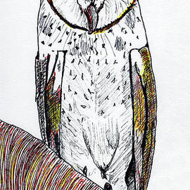 Barn Owl by Mary Capriole