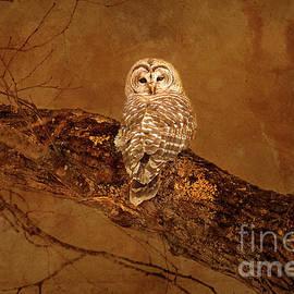 Barred Owl by Alana Ranney