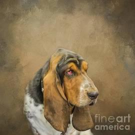Basset Hound Portrait by Eva Lechner