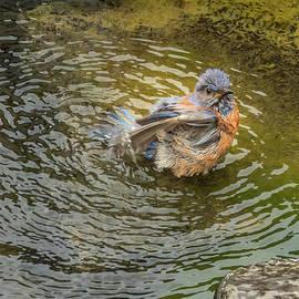 Bath Day for Bluebird by Jean Noren