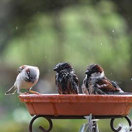 Bath time in the bird bath by Karen Kaspar