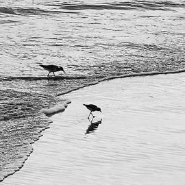 Beach Birds by Shoal Hollingsworth