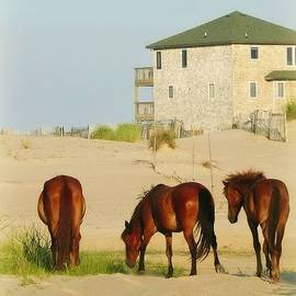 Beach Bums of OBX by Marilyn DeBlock