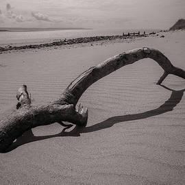 Beach Driftwood Crow Point Devon Monochrome by Richard Brookes