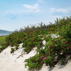 Beach Dune Beauty by Debbie Gracy