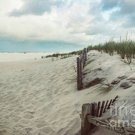 Beach Dunes at Long Beach Island by Colleen Kammerer