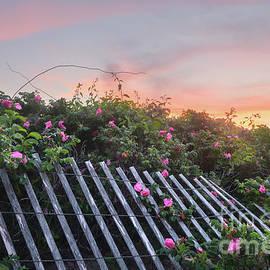 Beach Fences at Napatree Beach 3 by Jeff Maletski