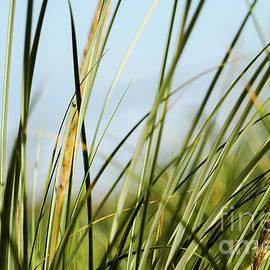 Beach Grass Carrickfinn Donegal by Eddie Barron