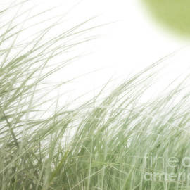 Beach Grass View by Hal Halli