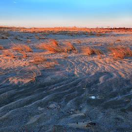 Beach Grasses by Renata Natale