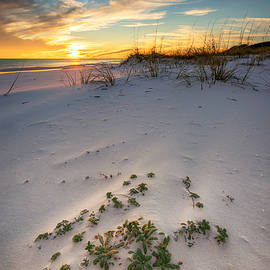 Beach Plants at Sunset by Mike Whalen