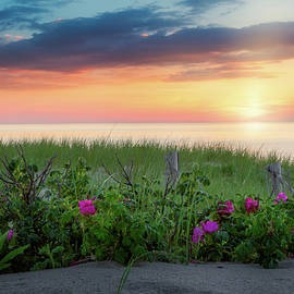 Beach Rose Sunset Cape Cod by Bill Wakeley