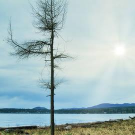 Beach Tree and Morning Winter Sun by Allan Van Gasbeck