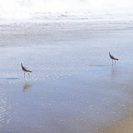 Beach Walkers  by Daniel Thompson