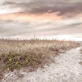 Beachhouse Dune Wildflowers by Debra and Dave Vanderlaan