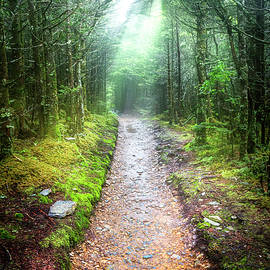 Beams of Light on the Appalachian Trail by Debra and Dave Vanderlaan