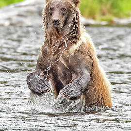 Bear Claws by Larry Gambon