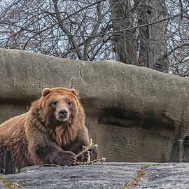 Bear by Sandi Kroll