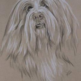 Beardie in Graphite by Barbara Keith