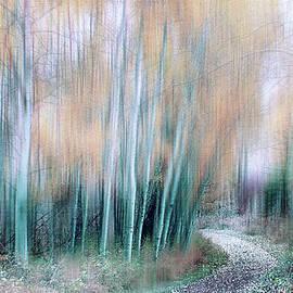 Beautiful Birches by Terry Davis