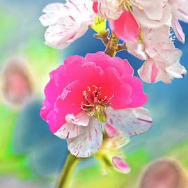Beautiful Blossoms by Az Jackson