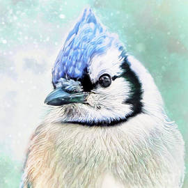 Beautiful Blue Jay by Tina LeCour