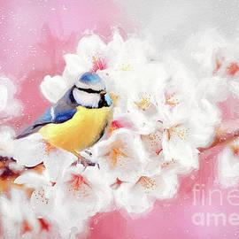 Beautiful Blue Tit by Tina LeCour