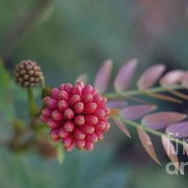 Beautiful Bokeh  by Kris Hiemstra
