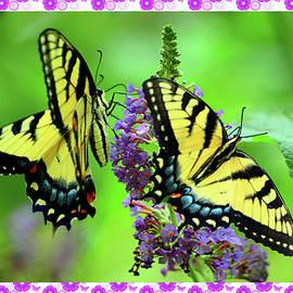 Beautiful Butterflies  by Constance Lowery