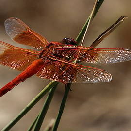 Beautiful Dragonfly by Brian Baker