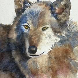 Beautiful Gray Wolf by Sue Carmony