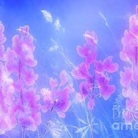 Beautiful lupins by larisa Fedotova