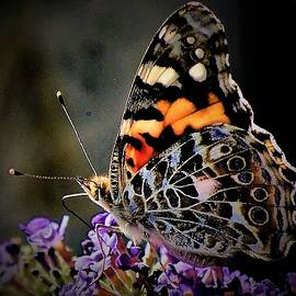 Butterfly Natures Beauty by Elizabeth Pennington