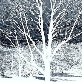 Beautiful Nature by Marcia Lee Jones