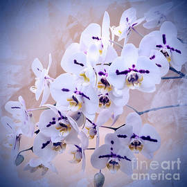 Beautiful Orchid Blooms Textured by Suzanne Wilkinson