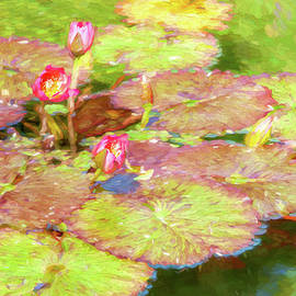 Beautiful pond lillies and lily pads by Sue Leonard