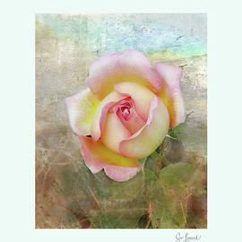 Beautiful Rose by Sue Leonard