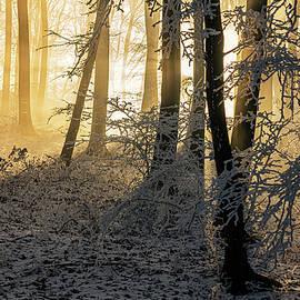 Beautiful sun rays in frozen winter forest by Dane Walker