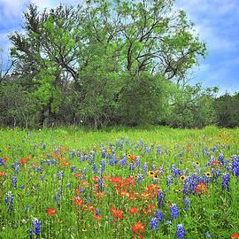 Beautiful Texas Spring by Lynn Bauer