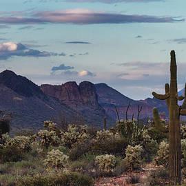 Beautiful Winter Evening In The Sonoran  by Saija Lehtonen