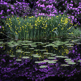 Beautiful yellow and blue flowers reflected in the water by Anita Gendt van