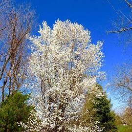 Beauty Against The Blue Sky by Debra Lynch