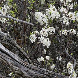 Beauty Amongst Deadwood by Mary Mikawoz