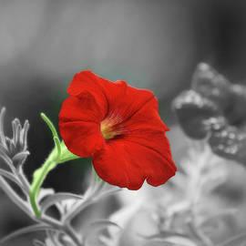 Beauty Captured in Selective Color by Marilyn DeBlock