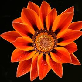 Beauty in Bloom by Yolanda Caporn