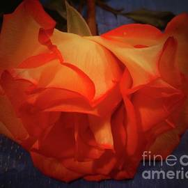 Becomes The Rose by Barbie Corbett-Newmin