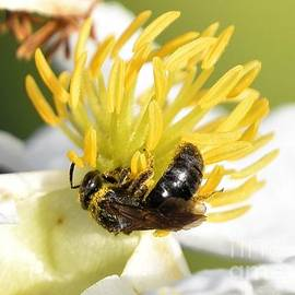 Bee Beautiful by Paula Goodman
