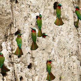 Bee-eaters by Gonzalo Merediz